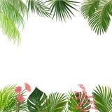 Vector il fondo tropicale della giungla con le palme ed i fiori Fotografia Stock