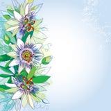 Vector il mazzo con i fiori tropicali della passiflora o di passione del profilo, il germoglio ed il fogliame sui precedenti past Fotografie Stock Libere da Diritti
