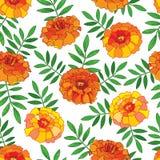 Vector il modello senza cuciture con il fiore arancio di tagetes o del tagete del profilo illustrazione vettoriale