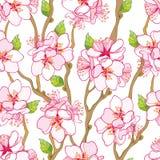 Vector il modello senza cuciture con il mazzo, il ramo e le foglie verdi di fioritura del fiore dell'albicocca del profilo sui pr illustrazione vettoriale
