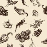 Vector il pepe di schizzo del fondo, il peperoncino rosso, l'aglio, i pomodori, la rucola, rosmarini Immagini Stock Libere da Diritti