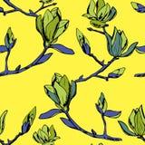 Vector il reticolo senza giunte Ornamento dei ramoscelli dei fiori della magnolia fotografia stock libera da diritti