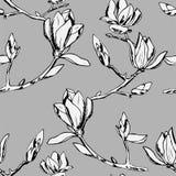 Vector il reticolo senza giunte Ornamento dei ramoscelli dei fiori della magnolia immagine stock libera da diritti