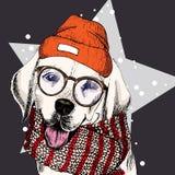 Vector il ritratto del beanie, dei vetri e della sciarpa d'uso del cane di labrador retriever sulla stella, neve Colore di Skecth Fotografia Stock