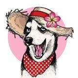 Vector il ritratto del cappello di paglia del cane del husky siberiano, del fiore e della bandana d'uso del pois Illustrazione di illustrazione vettoriale