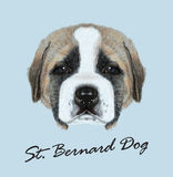 Vector Illustated Portrait of St. Bernard Dog Royalty Free Stock Images