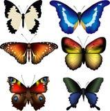 Vector illustation of butterflies Stock Photos