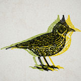 Vector Illustrated lark bird in engraved technic on old paper Stock Photos