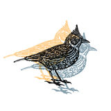 Vector Illustrated lark bird in engraved technic on white background Royalty Free Stock Photos