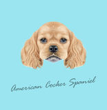 Vector Illustrated portrait of American Cocker Spaniel puppy Royalty Free Stock Image