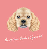 Vector Illustrated portrait of American Cocker Spaniel puppy Stock Photo