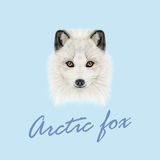 Vector Illustrated Portrait of Arctic fox. Royalty Free Stock Image