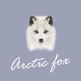 Vector Illustrated Portrait of Arctic fox. Royalty Free Stock Photo
