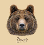 Vector Illustrated Portrait of Bear on beige background Stock Photos