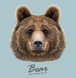 Vector Illustrated Portrait of Bear on blue background Royalty Free Stock Photography