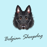 Vector Illustrated portrait of Belgian Shepherd. Royalty Free Stock Photography