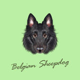 Vector Illustrated portrait of Belgian Shepherd. Royalty Free Stock Photos