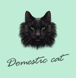 Vector Illustrated Portrait of Black Cat. Cute face of domestic cat with green eyes on green background Royalty Free Stock Photography