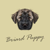 Vector Illustrated Portrait of Briard puppy. Royalty Free Stock Photo