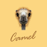 Vector Illustrated Portrait of Camel. vector illustration