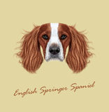 Vector illustrated Portrait of English Springer Spaniel dog Stock Image