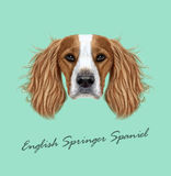 Vector illustrated Portrait of English Springer Spaniel dog. Cute face of domestic breed dog on blue background Stock Photos