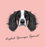 Vector illustrated Portrait of English Springer Spaniel dog. Stock Photography