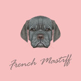 Vector Illustrated Portrait of French Mastiff puppy. Royalty Free Stock Image