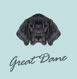 Vector Illustrated portrait of German Great Dane puppy. royalty free stock image