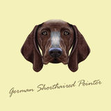 Vector Illustrated portrait of German Shorthaired Pointer dog. Stock Images