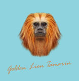 Vector Illustrated portrait of Golden lion tamarin monkey. Cute fluffy face of primate on blue background Royalty Free Stock Images