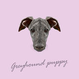 Vector Illustrated Portrait of Greyhound puppy. Stock Photos