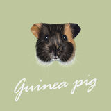 Vector Illustrated portrait of Guinea pig. stock illustration