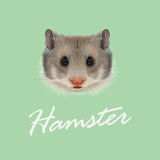Vector Illustrated portrait of Hamster. Stock Images