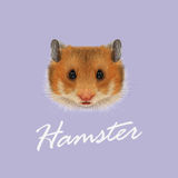 Vector Illustrated portrait of Hamster. Stock Photography