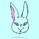 Vector Illustrated Portrait of Hare. Vector Illustrated, Portrait of Hare Royalty Free Stock Photos
