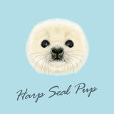 Vector Illustrated Portrait of Harp Seal Pup. Cute fluffy face of Harp Seal baby on blue background Stock Images