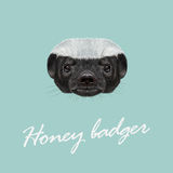 Vector Illustrated portrait of Honey badger. Stock Photos