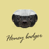Vector Illustrated portrait of Honey badger. Royalty Free Stock Photo