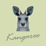 Vector Illustrated portrait of Kangaroo. Royalty Free Stock Images