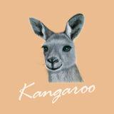 Vector Illustrated portrait of Kangaroo Royalty Free Stock Image