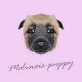 Vector Illustrated Portrait of Malinois dog. Royalty Free Stock Photography