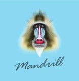 Vector Illustrated portrait of Mandrill monkey
