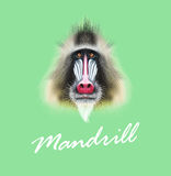 Vector Illustrated portrait of Mandrill monkey. Cute fluffy face of primate on green background Royalty Free Stock Photos