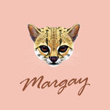 Vector Illustrated Portrait of Margay cat. Stock Image
