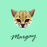 Vector Illustrated Portrait of Margay cat. Royalty Free Stock Image