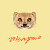Vector Illustrated portrait of Mongoose. Stock Photos