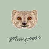 Vector Illustrated portrait of Mongoose. Stock Images