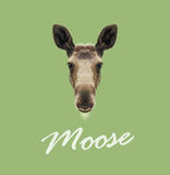Vector Illustrated Portrait of Moose. Stock Image