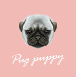 Vector Illustrated portrait of Pug puppy. Cute fluffy silver face of domestic dog on pink background vector illustration